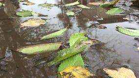 Det gula landskapet för höstsidor som svävar i en pöl av vatten, är regnnaturen stock video