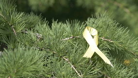 Det gula medvetenhetbandbandet sörjer på trädfilialen stock video