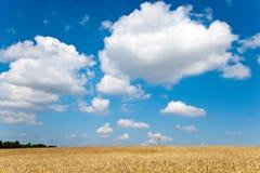 Det gula mossiga fältet med blå himmel och vit fördunklar i sommaren - tjeckiskt jordbruk - den ekologiska lantbruk- och havreväx Arkivfoton