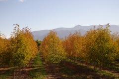 Det gula trädet lämnar agains bergen royaltyfri bild
