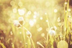 Det guld- abstrakta bakgrundsbegreppet, den mjuka fokusen, bokeh, värme signal Royaltyfria Foton