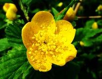 Det guld- Blommor Royaltyfri Foto