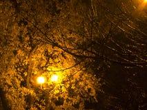 Det guld- ljuset av höstsidor Arkivbilder