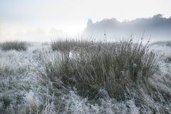 Det härliga Autumn Fall dimmiga gryninglandskapet över frost täckte fi Arkivfoton