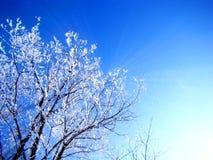 Det härliga bakgrundsfotoet med ett vinterlandskap av trädet på en bakgrund för blå himmel med solen rays Arkivbilder