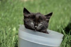 Det härliga barnet svärtar och bryner kattinsidahinken Liten gullig kattunge som spelar i en blomkruka Fotografering för Bildbyråer