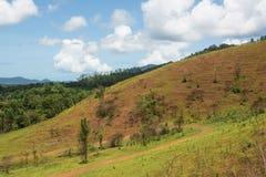 Det härliga berget för torrt gräs för landskap i Thailand Royaltyfri Fotografi