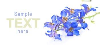 det härliga blåa exemplet blommar text Arkivfoton