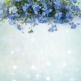 Det härliga dekorativa blom- kortet med blommor glömmer mig-inte Fotografering för Bildbyråer