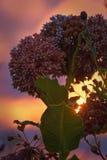 Det härliga fältet blommar vid vägen Arkivfoton