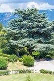 Det härliga gamla trädet i den Livadia slotten parkerar Fotografering för Bildbyråer