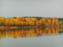 Det härliga höstlandskapet av träd reflekterade i vatten Royaltyfria Bilder