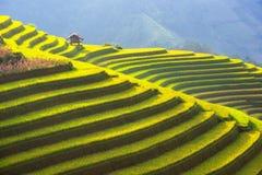 Det härliga lagret av berget och naturen i risterrass av det Vietnam landskapet Arkivfoton
