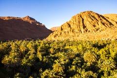 Det härliga landskapet av gömma i handflatan oasen nästan Tinghir, Marocko, Afr royaltyfria bilder