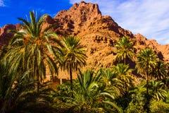 Det härliga landskapet av gömma i handflatan oasen nästan Tinghir, Marocko, Afrika royaltyfri fotografi