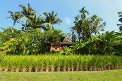 Det härliga landskapet av risfält Risfält med hemmet och naturen Arkivfoto