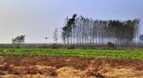 Det härliga landskapet i höst Royaltyfria Foton