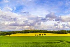 Det härliga landskapet med våldtar fältet Royaltyfria Foton