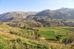 Det härliga lantbruket terrasserar i den Colca dalen, Peru Arkivbilder