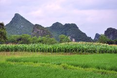 Det härliga lantliga landskapet i vår Fotografering för Bildbyråer