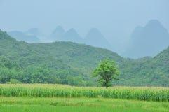 Det härliga lantliga landskapet i vår Arkivfoto