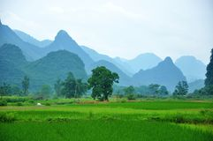 Det härliga lantliga landskapet i vår Royaltyfri Bild