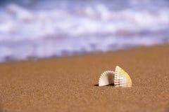 Det härliga skalet orsakas av en storm på kusten i solig dag royaltyfri fotografi