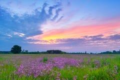 Det härliga soluppgångbygdfältet blommar himmelmolnlandskap Royaltyfria Foton