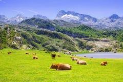Det härliga sommarberglandskapet med sjön och betar Arkivfoton