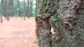 Det härliga trädet på att regna skogen, når att ha regnat royaltyfria foton