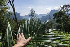 Det härliga tropiska landskapet, och räcker thus växten Arkivbild