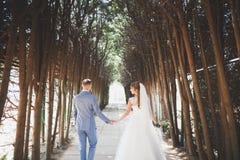 Det härliga unga bröllopparet är kyssande och le i parkera Arkivfoto