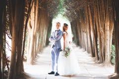 Det härliga unga bröllopparet är kyssande och le i parkera Arkivbild