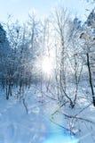 Det härliga vinterlandskapet med snö täckte träd - solig vinterdag Arkivfoto