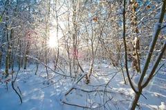 Det härliga vinterlandskapet med snö täckte träd - solig vinterdag Royaltyfri Bild