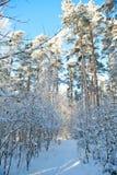 Det härliga vinterlandskapet med snö täckte träd - solig vinterdag Royaltyfri Fotografi