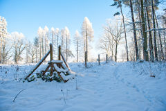 Det härliga vinterlandskapet med snö täckte träd - solig vinterdag Arkivbilder