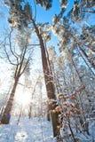 Det härliga vinterlandskapet med snö täckte träd - solig vinterdag Arkivbild