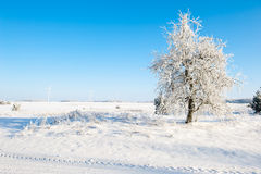 Det härliga vinterlandskapet med snö täckte träd - solig vinterdag Royaltyfria Bilder