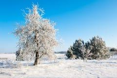 Det härliga vinterlandskapet med snö täckte träd - solig vinterdag Royaltyfria Foton