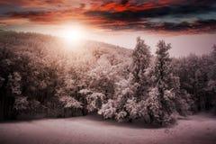 Det härliga vinternaturlandskapet, täckte träd snöar royaltyfria foton