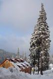 det höga huset nära sörjer vinter Arkivbild