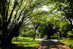 Det h?rliga gr?na tr?det, v?xter, skogen och blommor i de utomhus- tr?dg?rdarna och parkerar royaltyfri foto