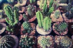 Det h?rliga kaktustr?det i de offentliga tr?dg?rdarna som ?r utomhus- och, parkerar arkivfoton