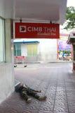 Det hemlösa folket sover i framdel av den THAILÄNDSKA banken för CIMB på Yaowarat Royaltyfri Bild