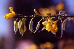 Det hemliga livet av växter Arkivbild