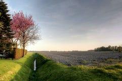 Det holländska lantliga landskapet på en solig dag kan in Arkivbild