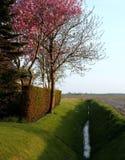 Det holländska lantliga landskapet på en solig dag kan in Royaltyfri Foto