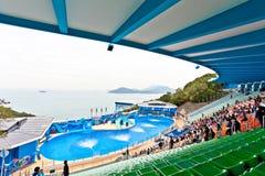 Det Hong Kong hav parkerar delfinarium fotografering för bildbyråer