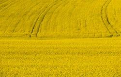 Det i naturlig storlek rapsfröfältet med traktoren fodrar i bakgrunden royaltyfri bild